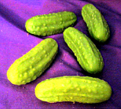 Wax Large Pickles