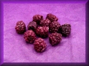 Wax Large Boysenberry